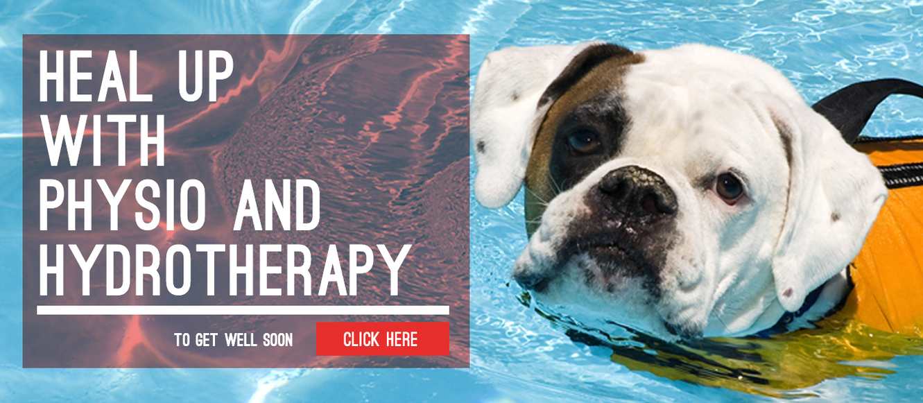 Pet Hotel and Daycare Centre | AtFrits Cape Town